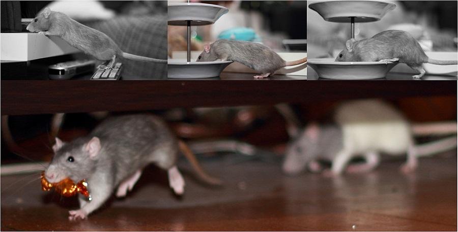 mousecandy1